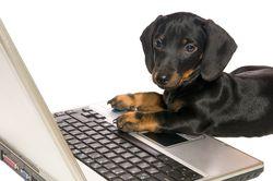 Bigstockphoto_Dog_With_Notebook_5150953