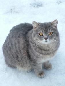 bigstockphoto_Cat_509682