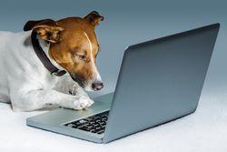 Bigstock-Dog-Computer-33362384