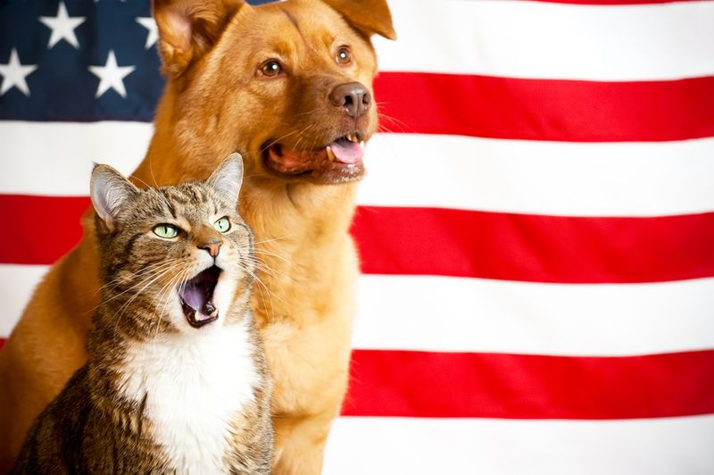Bigstock-Cat-And-Dog-With-Us-Flag-7900134