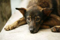 Bigstock-The-Sad-Puppy-39635674