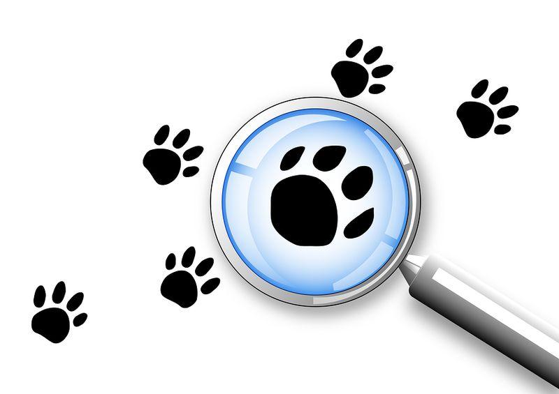 Bigstock-Search-6249619