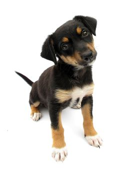 Bigstock_Dog_puppy_isolated_on_white_ba_27014993