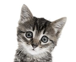 Bigstock-kitten-on-a-white-background-27934382