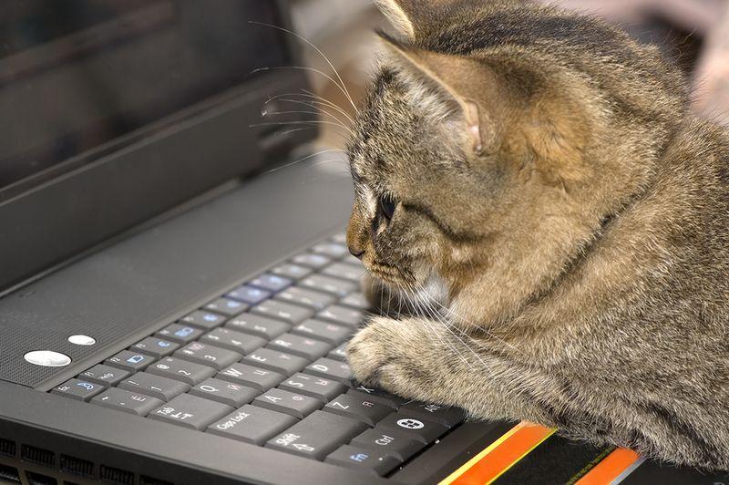 Bigstock-Kitten--Laptop-2281338