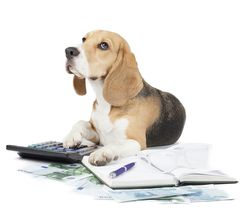 Bigstock-Business-Dog-Typewriter-50056712